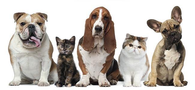 Prohibición de mascotas en un piso de alquiler