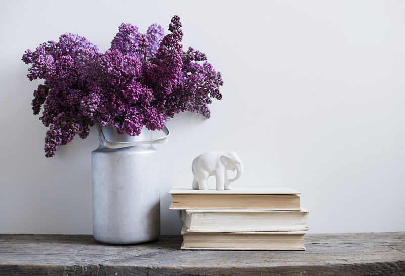 Decora Tu Casa Con Plantas De Interior Con Flor - Plantas-interior-con-flor