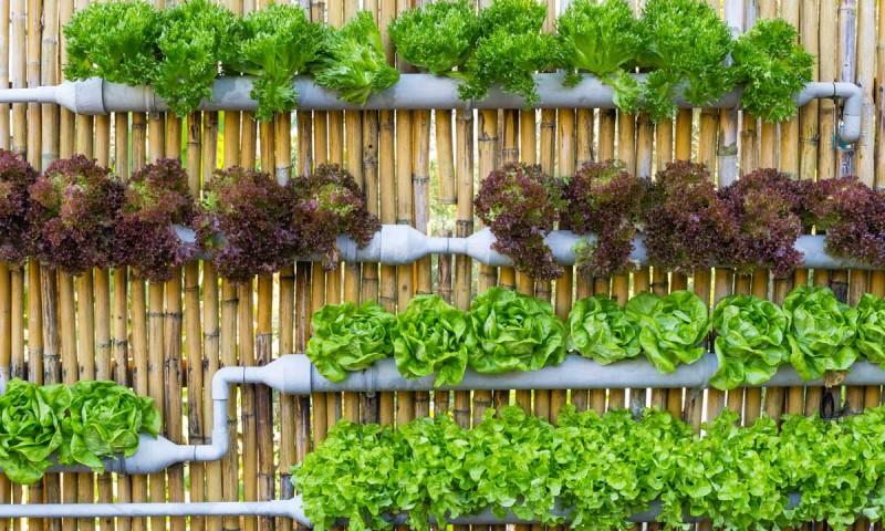 Huerto urbano come m s sano cultivando tus propias hortalizas - Huerto en la terraza ...