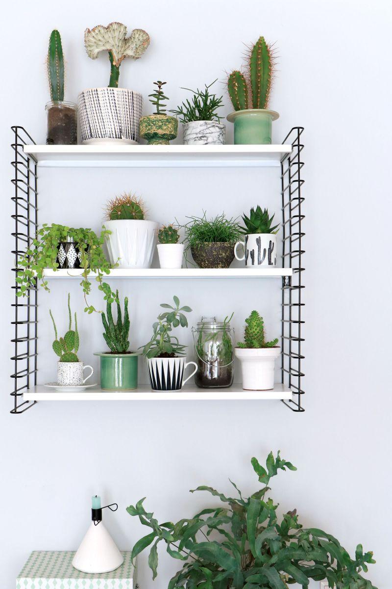 Las mejores ideas para decorar estanter as yaencontre for Estanteria plantas interior